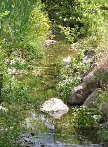 Cerrito Creek above Stannage, June 2006