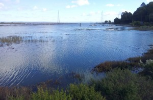 King Tide, Mouth of Gallinas Creek, Santa Venetia