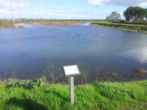 King Tide at the Santa Venetia Open Space - Levy at the end of Vendola