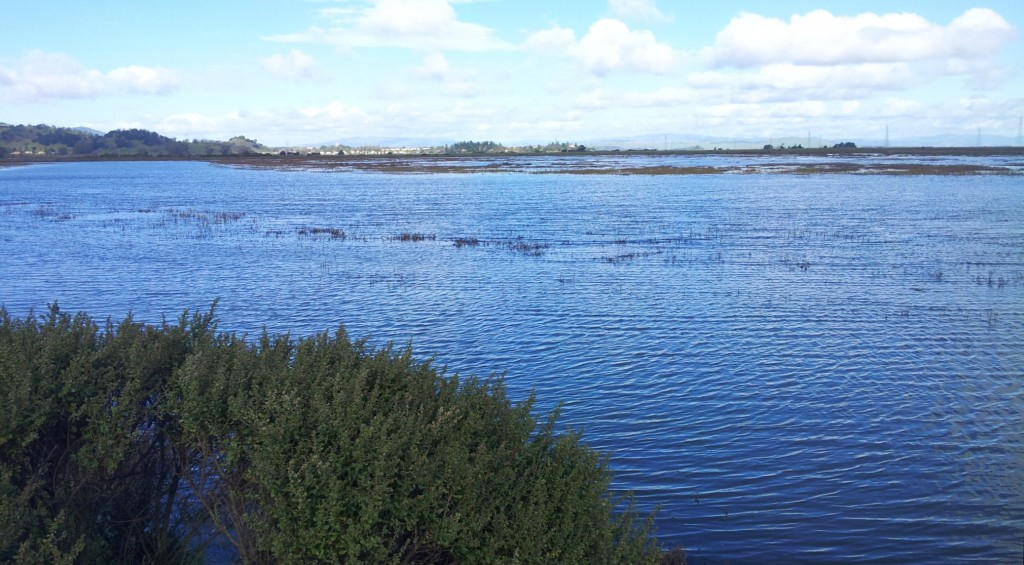 Gallinas Creek at King Tide