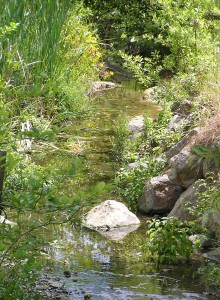 Cerrito Creek above Stannage, June 2006