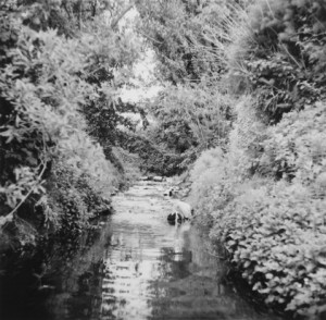 Temescal Creek-near San Pablo 1970